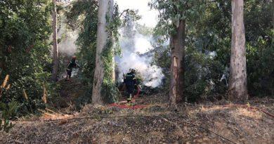 Πυρκαγιά σε αλσύλλιο στη Δάφνη