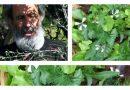 Ο «γκουρού» της φυσικής καλλιέργειας στον Άγιο Δημήτριο (VIDEO)